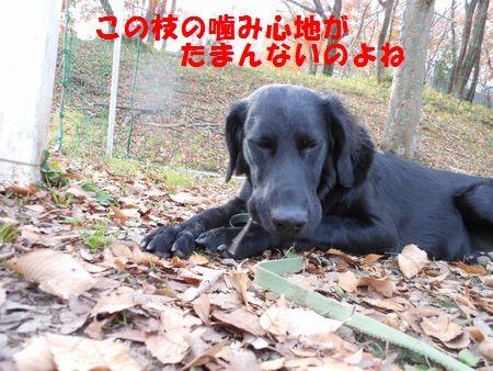011_20111222012656.jpg