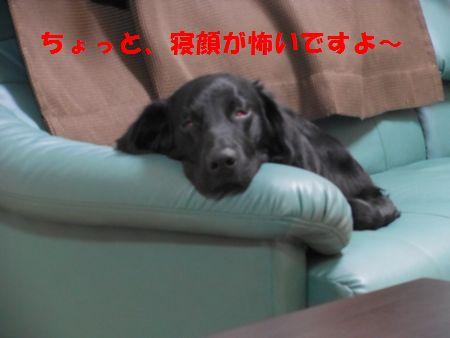 015_20111223005318.jpg