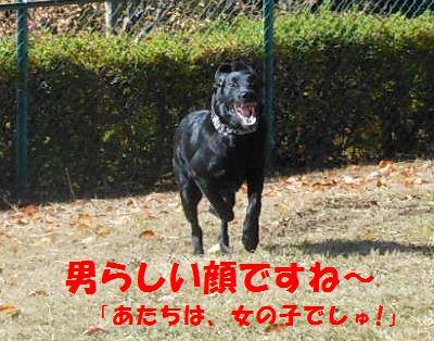 017_20111215130019.jpg