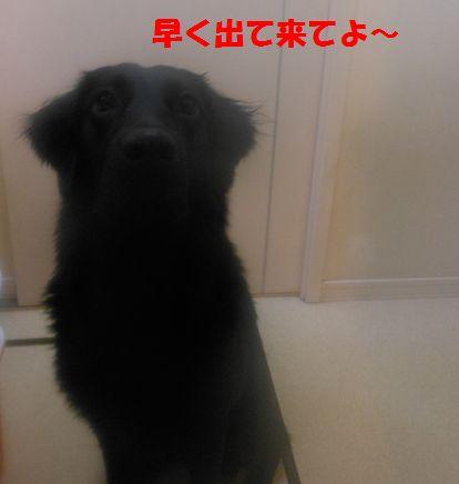 022_20120220181010.jpg