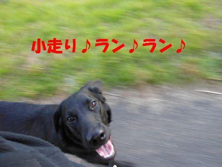 031_20111210004308.jpg