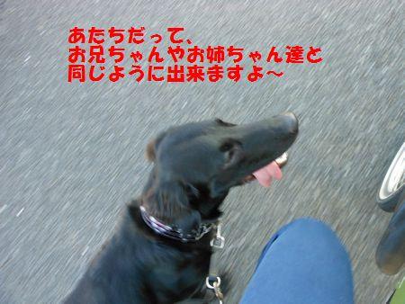 034_20111213011221.jpg