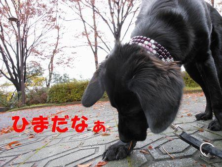 036_20111210004305.jpg
