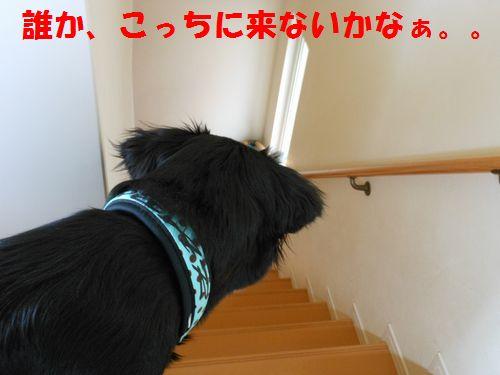 052_20120309214514.jpg