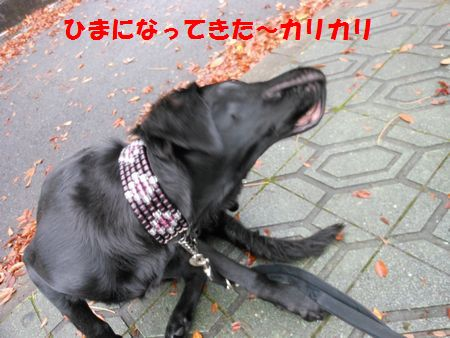 053_20111215130020.jpg