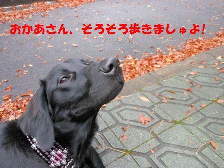054_20111215130020.jpg