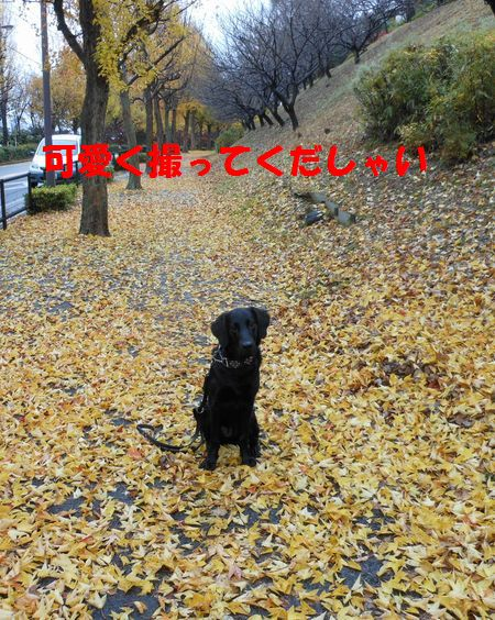 057_20111210004304.jpg