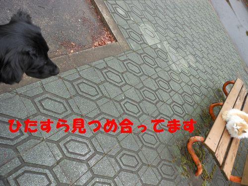 060_20120307005703.jpg