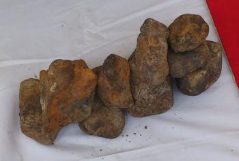 聚楽第跡出土栗石