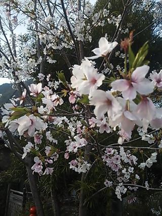 2013-03-23 熊野古道