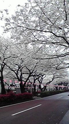 2013-03-29播磨坂