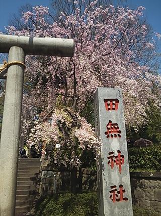 2013-04-04 田無神社