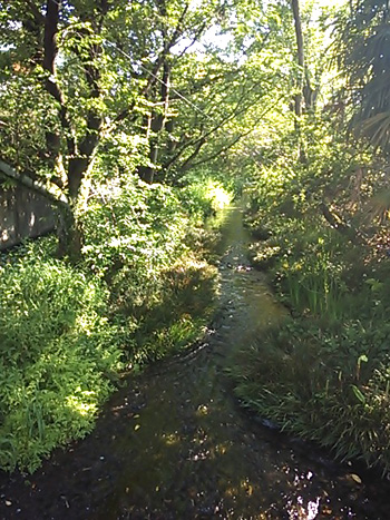 2013-04-27 三島 観ずの苑緑地