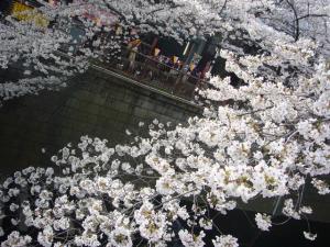 中目黒の桜2012_5
