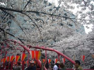 中目黒の桜2012_6