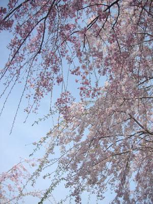 20120410坂下公園5