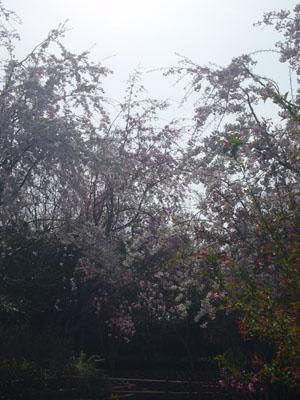 20120410坂下公園11