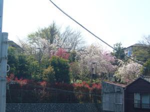 4/12(木)坂下公園