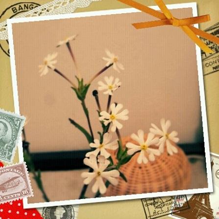 好きな花3