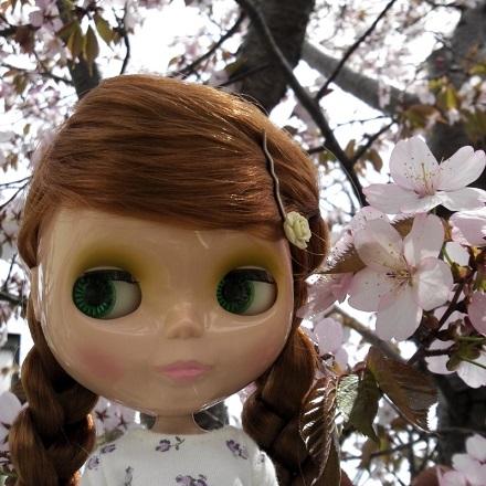 桜 ぽん1