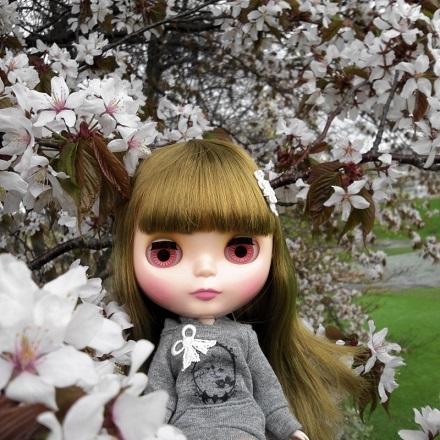 桜雨 すぅ2