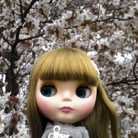 桜雨 すぅ4