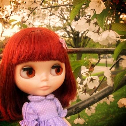 夕暮れ桜1