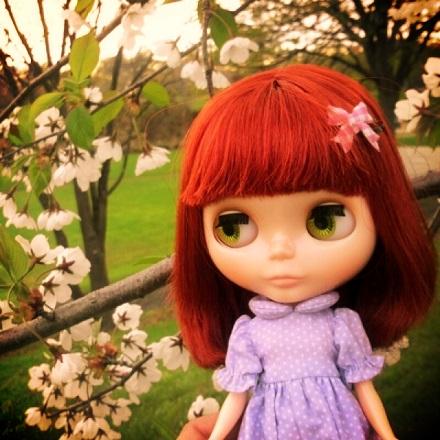 夕暮れ桜2