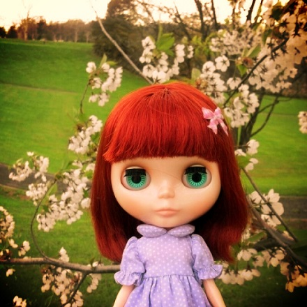 夕暮れ桜4