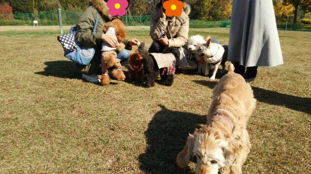 極楽寺公園ドッグラン