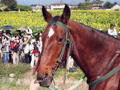 馬 大好き