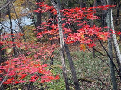 赤城南面の紅葉