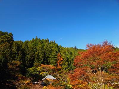 秋の養沢2