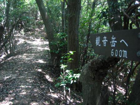 キヌガサタケ 096