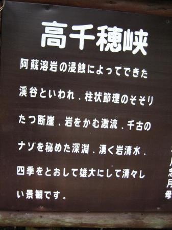 ヒメユリ 101