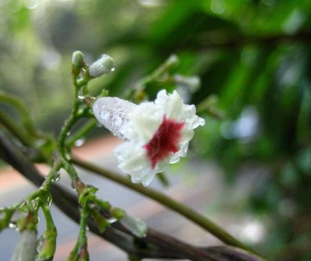 清水の花 022
