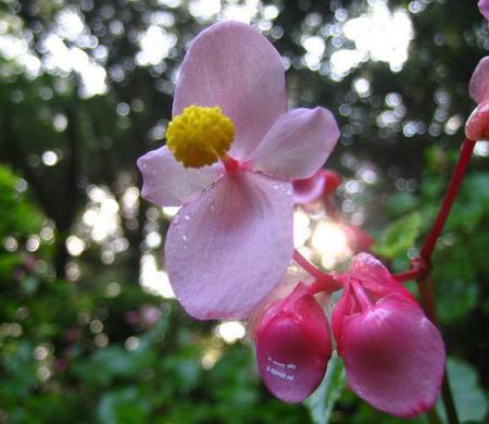 清水の花 069