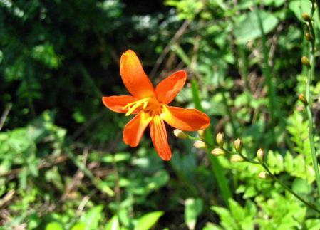 清水の花 117