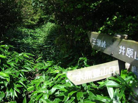 井原山 153
