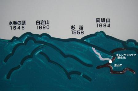 黄蓮華升痲 074