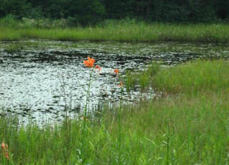 樫原湿原 116
