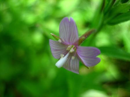 赤花20110912162935976s