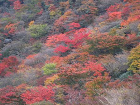 三俣山 紅葉 139