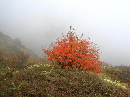 三俣山 紅葉 069