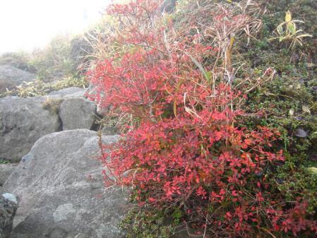三俣山 紅葉 063