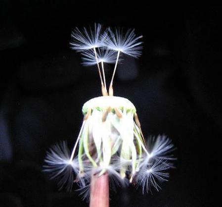 種子 021
