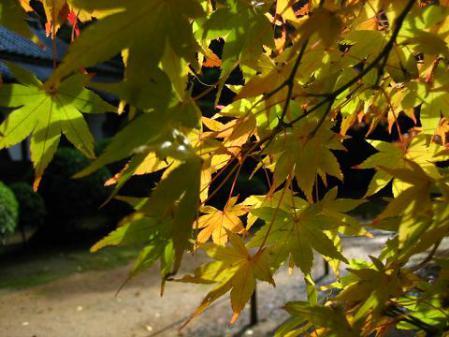 冬の花蕨 093