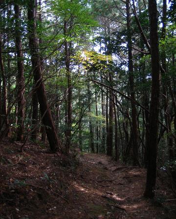 小岱山 177