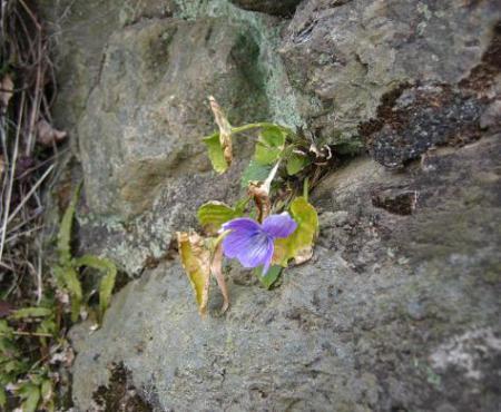 清水の花 035