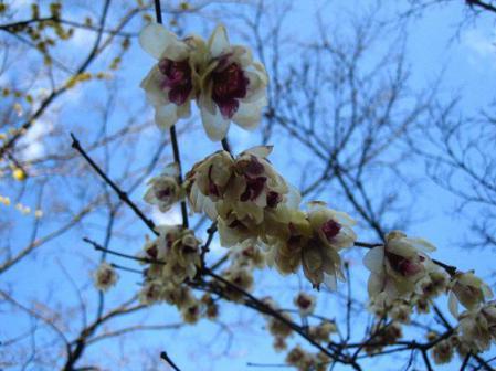 清水の花 065